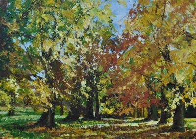 Autumn in Abington